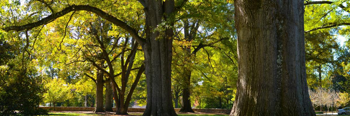 Photo of trees on Duke's East Campus