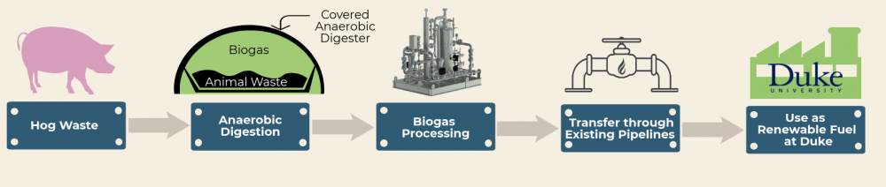 biogas infographic